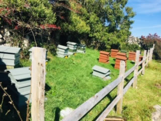 our-apiary-3