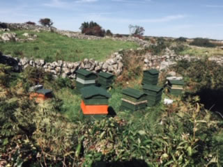 our-apiary-4
