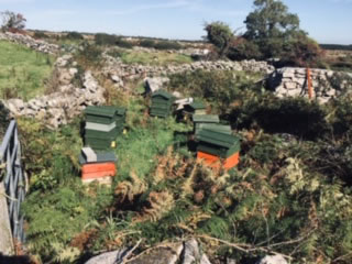 our-apiary-5
